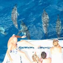 dolphin-watching-mauritius
